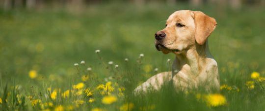 Dog owners beware. Photo by Vincent van Zalinge on Unsplash