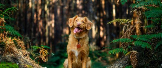 Dog Control Public Space Consultation